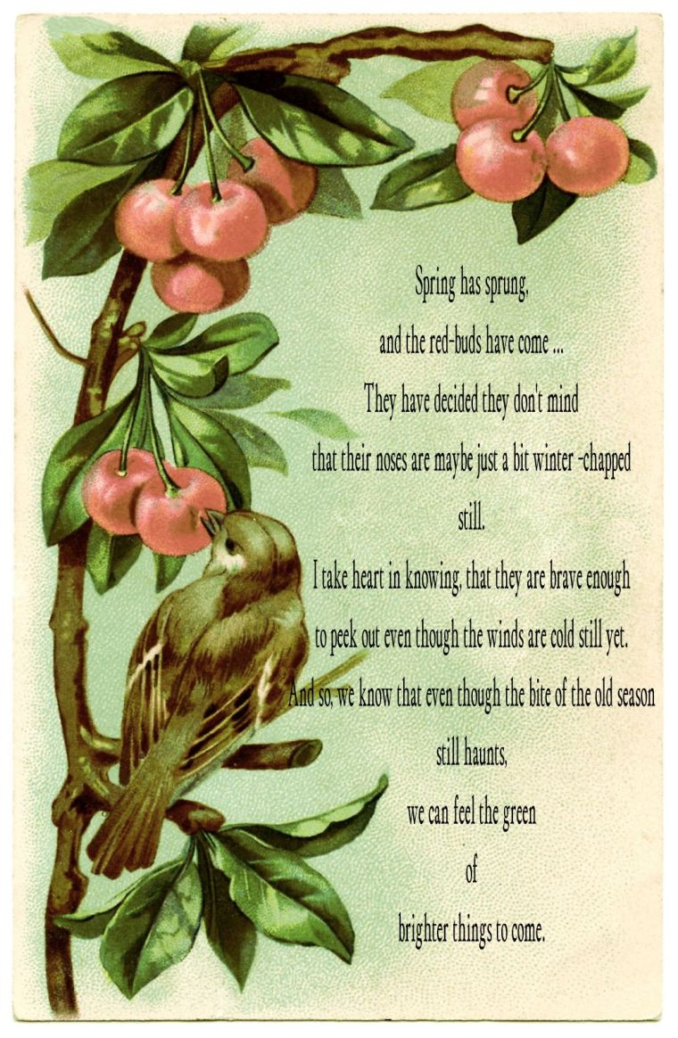 BeFunky_bird-cherries-images-Graphics-Fairy2.jpg