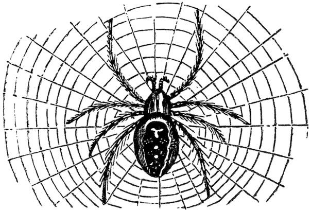 Halloween-Spider-Image-GraphicsFairy