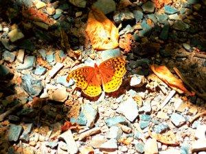 orangebutterfly2015