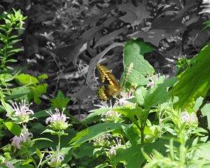 yellowbutterflyongreenplant
