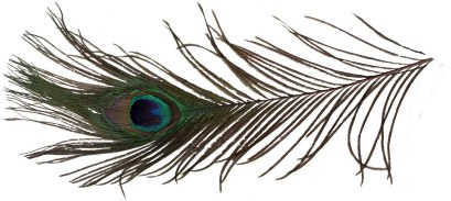 a-peacock-feather-tattoo-sample-1