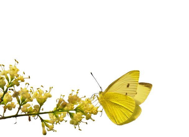 butterfly-border-1354124