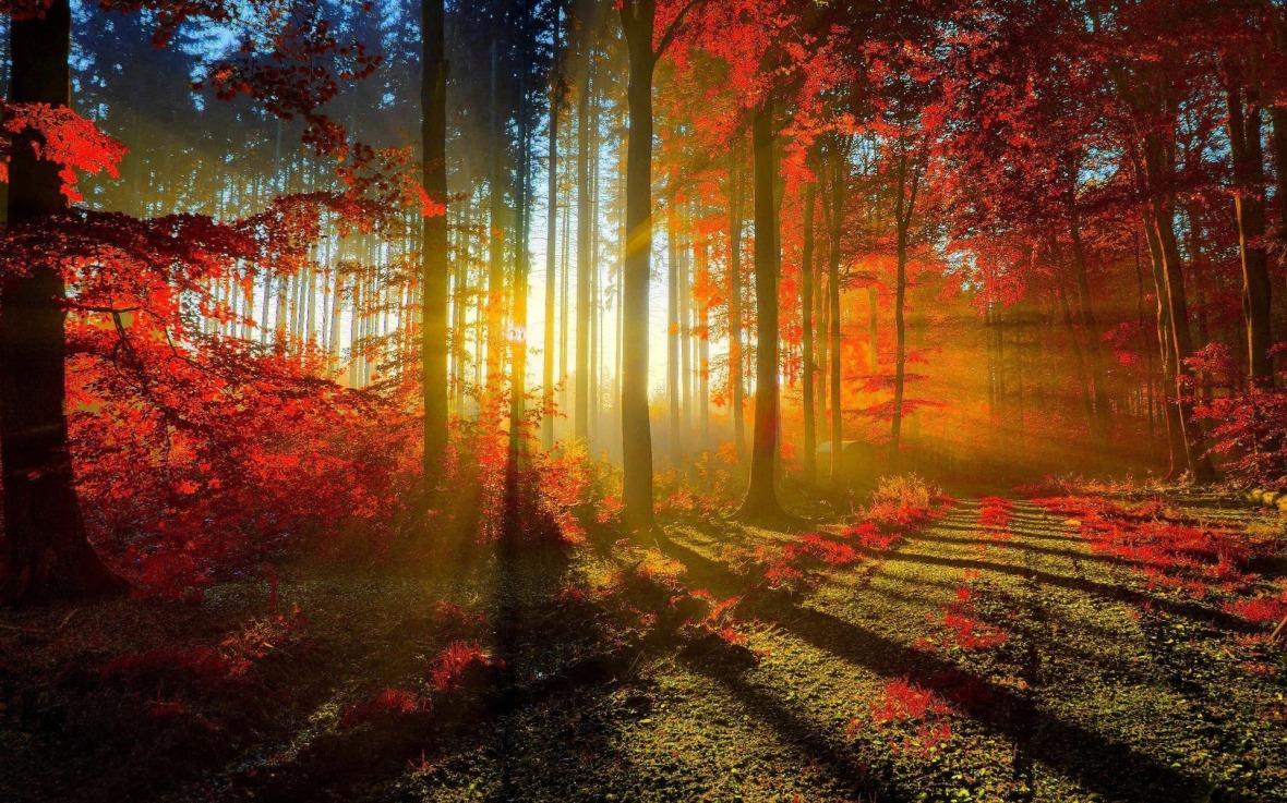 amazing-woods-wallpaper-20372-20882-hd-wallpapers